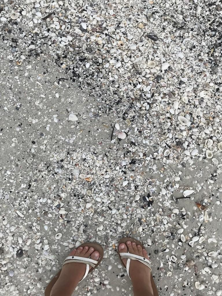 Marco Island, Florida Beach with Shells